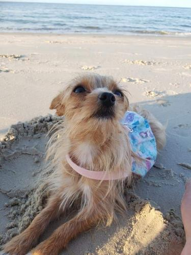 Lost Female Dog last seen Soap n Suds on Rosemont , Virginia Beach, VA 23452