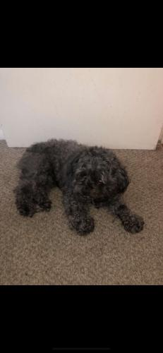 Lost Male Dog last seen Greenbrier Ave, Norfolk, VA 23505