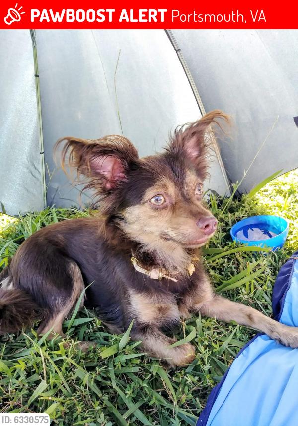 Lost Female Dog last seen Victory blvd, Portsmouth, VA 23523