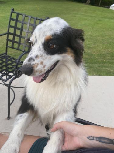 Lost Female Dog last seen Kukuihaele Park, Honokaa, Honokaa, HI 96727