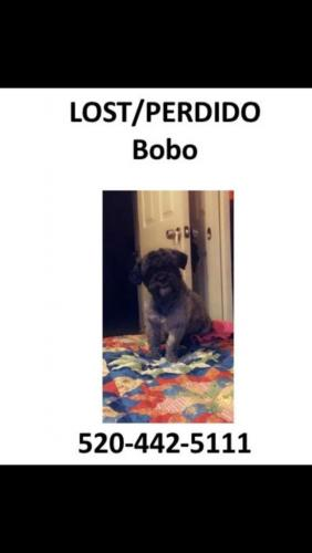 Lost Male Dog last seen Chandler boulevard and Fresno Street Chandler Arizona, Chandler, AZ 85225