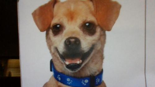 Lost Male Dog last seen alla road and maxella ave, Los Angeles, CA 90066