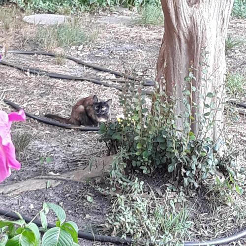 Found/Stray Unknown Cat last seen South Blvd. Behind Mount Trashmore , Virginia Beach, VA 23452