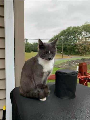 Lost Male Cat last seen Larksville, Larksville, PA 18704