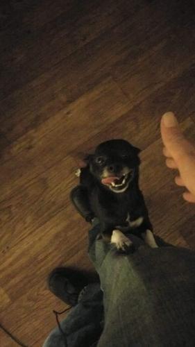 Lost Female Dog last seen 83rd and Indian school , Phoenix, AZ 85037