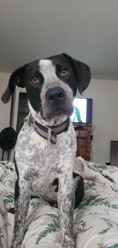 Lost Male Dog last seen gate 4 norfolk naval base, Norfolk, VA 23503