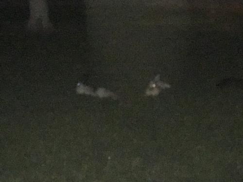 Found/Stray Unknown Rabbit last seen Rural & McClintock, Tempe, AZ 85282