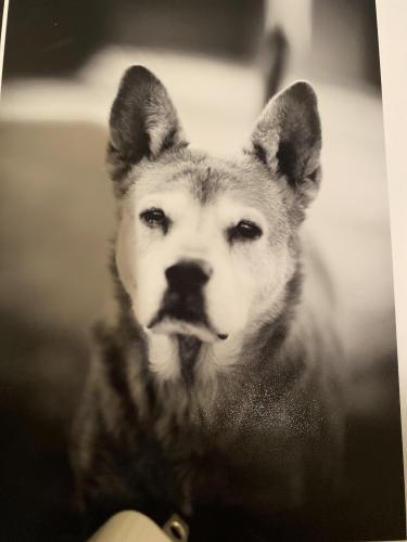 Lost Female Dog last seen Hayden & Thomas , Scottsdale, AZ 85251