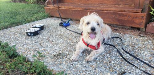 Found/Stray Male Dog last seen Near N Donnawood Ct, Virginia Beach, VA 23452