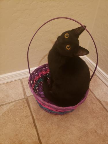 Lost Female Cat last seen Meridian and harbor town, Phoenix, AZ 85086