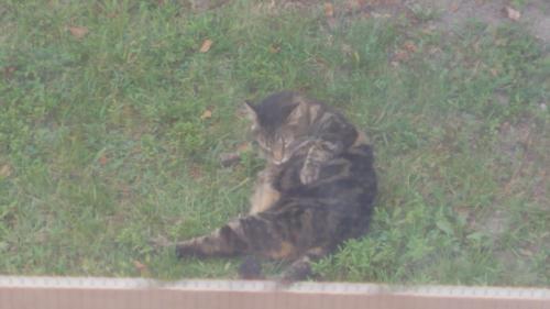 Found/Stray Unknown Cat last seen Near Boxford Rd., Virginia Beach, VA 23456