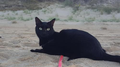 Lost Female Cat last seen Near south mills rd, Moyock, NC 27958