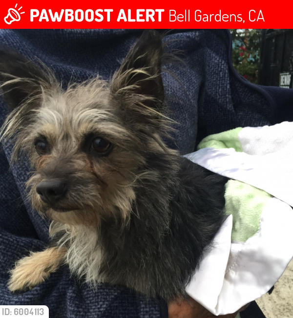 Lost Male Dog last seen Emil ave bell Gardens ca, Bell Gardens, CA 90201
