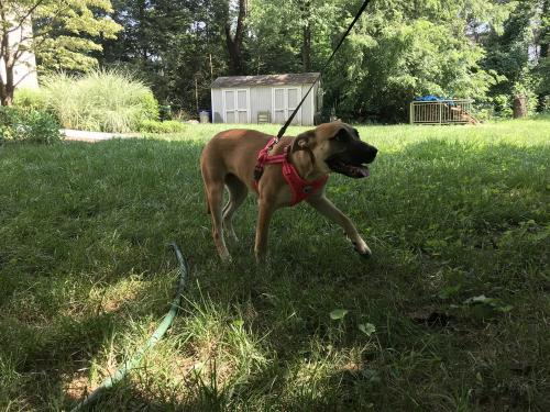 Lost Female Dog last seen Frying Pan Park, Herndon, VA 20171