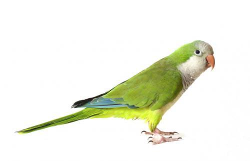 Lost Female Bird last seen Jule Drive, Country Mill, Clark Farm Estates, Chesapeake, VA 23322