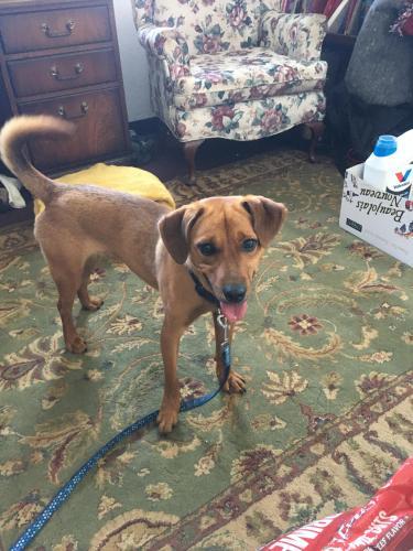 Lost Male Dog last seen Near Main Street, Newport News, VA 23601