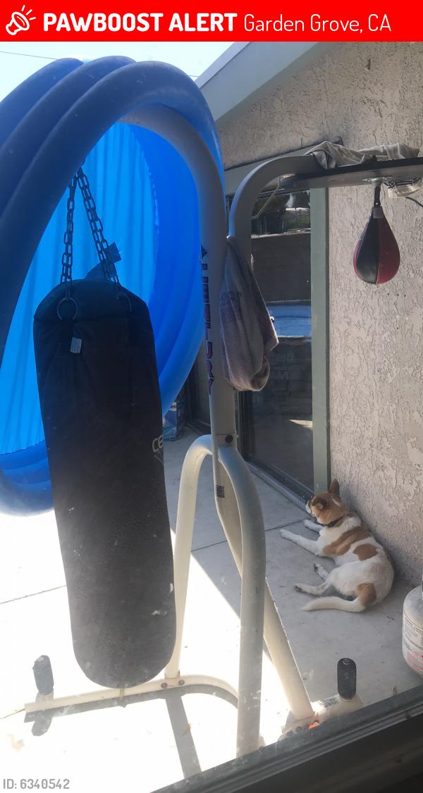 Lost Male Dog last seen Bixby and gilbert , Garden Grove, CA 92841