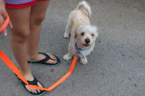 Lost Male Dog last seen Near W 55th St, Los Angeles Ca, 90037, Los Angeles, CA 90037