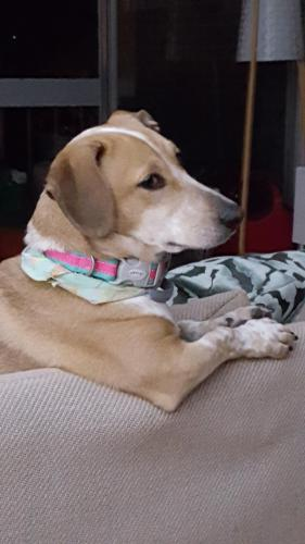 Lost Female Dog last seen North Shore and Hickory Cluster, Reston, VA 20190