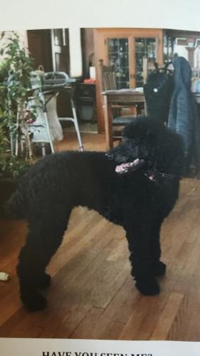 Lost Female Dog last seen The Valley - Menomonee, Los Angeles County, CA 91401