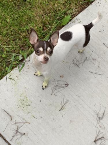 Lost Female Dog last seen Stancil st and Cassidy , Virginia Beach, VA 23452