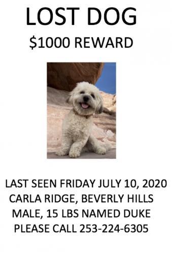 Lost Male Dog last seen Carla Ridge, Beverly Hills, CA 90210