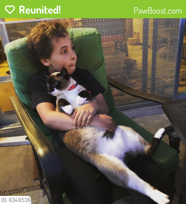 Reunited Male Cat last seen Valley View and Tiffany, Garden Grove, CA 92845