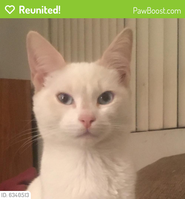 Reunited Female Cat last seen Cahuenga Blvd, Los Angeles, CA 91602