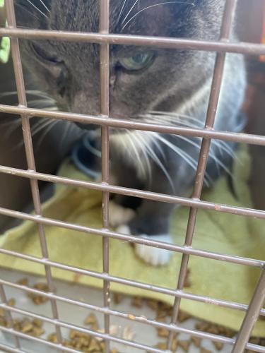 Found/Stray Male Cat last seen Lynnhaven parkway , Virginia Beach, VA 23453