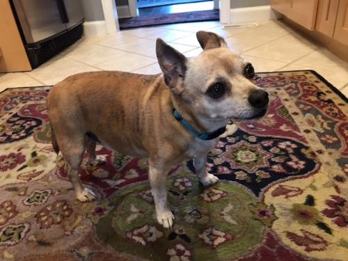 Found/Stray Male Dog last seen Wilson Road Chesapeake, VA 23322, Chesapeake, VA 23322