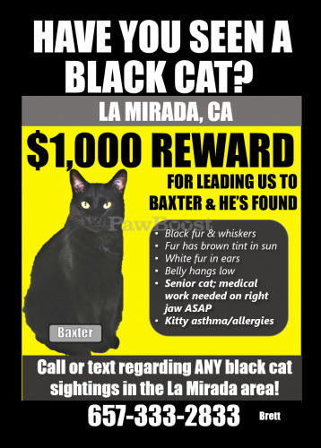 Lost Male Cat last seen Biola & Stage Rd, The Ranch Apartments, La Mirada, CA 90638