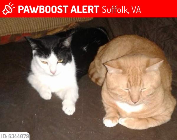 Lost Male Cat last seen Beamonds mill, Suffolk, VA 23434