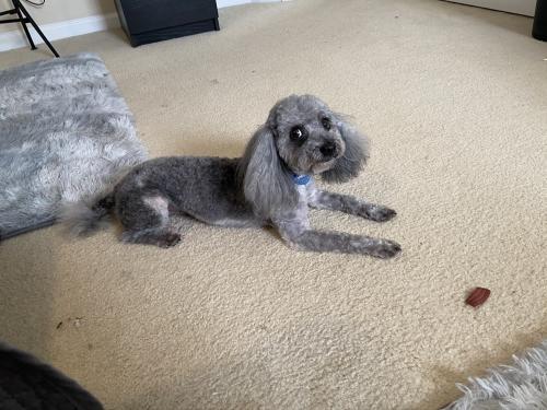 Lost Male Dog last seen Virginia Beach, Virginia Beach, VA 23451