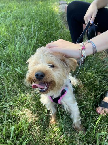 Found/Stray Male Dog last seen Norview ave, Norfolk, VA 23513