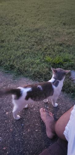 Found/Stray Male Cat last seen Deep Creek Middle School, Chesapeake, VA 23323