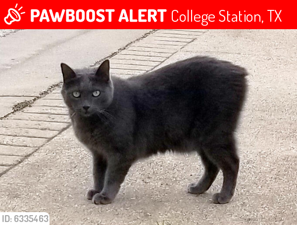Lost Male Cat last seen Rocky Vista Dr. College Station TX, College Station, TX 77845