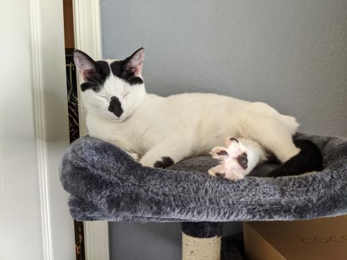 Lost Male Cat last seen Windermere & Azalea. Norview & John's st., Norfolk, VA 23513