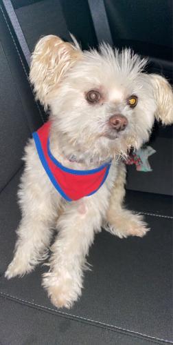 Lost Male Dog last seen 67th sw 25th street , Miramar, FL 33023