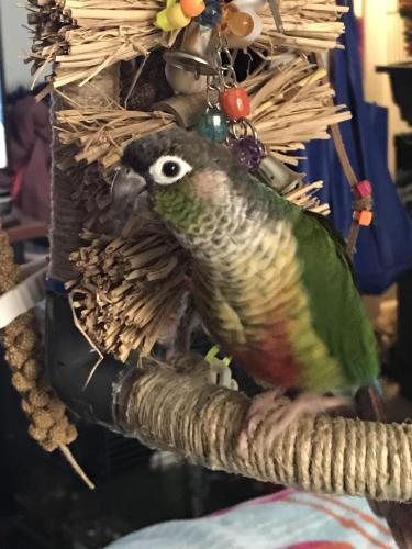 Lost Female Bird last seen Holland rd , Virginia Beach, VA 23456