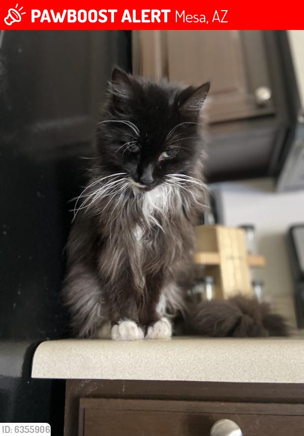 Lost Male Cat last seen Power and baseline - clearview development , Mesa, AZ 85209