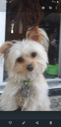 Lost Male Dog last seen Telegraph road , Downey, CA 90670
