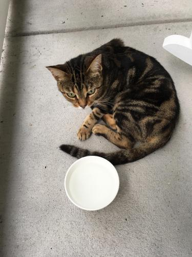 Found/Stray Unknown Cat last seen Windy Pines, Virginia Beach, VA 23456