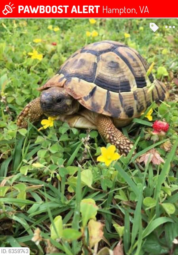 Lost Male Reptile last seen Shelton rd in Hampton Virginia , Hampton, VA 23663