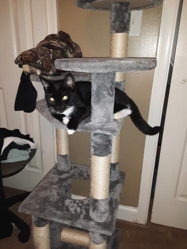 Lost Female Cat last seen Gum Ave and Tillman Dr, Virginia Beach, VA 23452