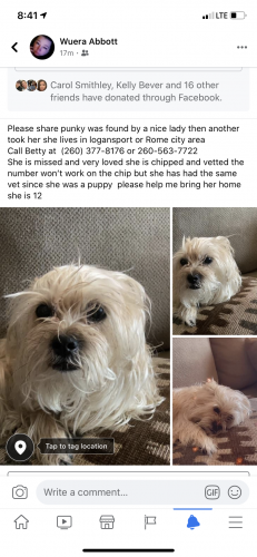 Lost Female Dog last seen State road 24 , Wabash, IN 46992