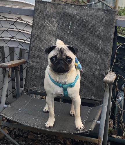 Lost Female Dog last seen Kwik trip and Meijer's , Howard, WI 54303
