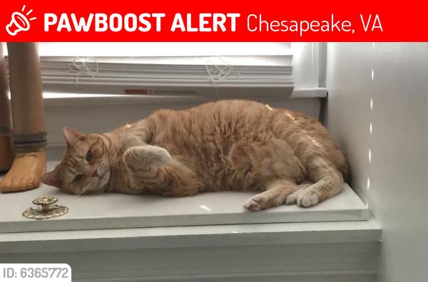 Lost Male Cat last seen Near Ashwood Dr, Chesapeake, VA 23321