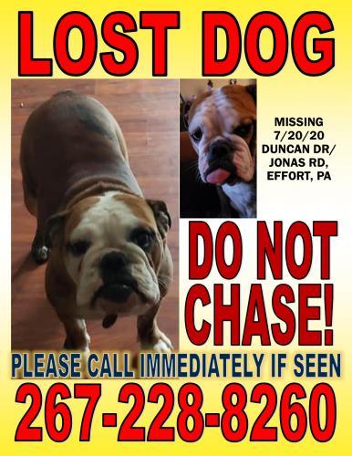 Lost Female Dog last seen Duncan dr & jonas rd, Effort, PA 18330