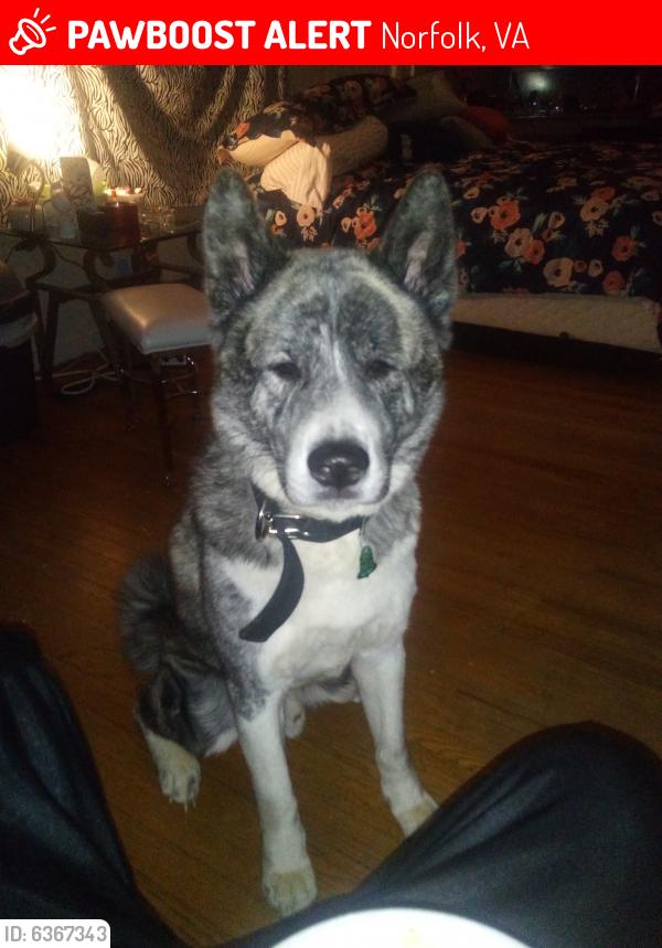 Lost Male Dog last seen hotel, Norfolk, VA 23510