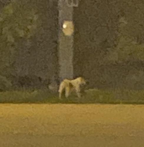 Found/Stray Female Dog last seen LynnHaven Parkway and Saber Street, Virginia Beach, VA 23456